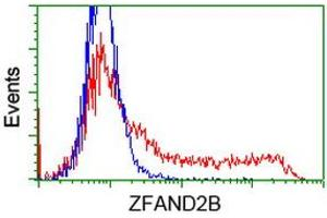 Image no. 3 for anti-Zinc Finger, AN1-Type Domain 2B (ZFAND2B) antibody (ABIN1501805)