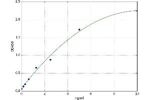 Image no. 1 for Cytochrome P450, Family 1, Subfamily A, Polypeptide 1 (CYP1A1) ELISA Kit (ABIN5523127)