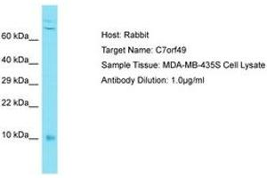 Image no. 1 for anti-Chromosome 7 Open Reading Frame 49 (C7ORF49) (AA 8-57) antibody (ABIN6750662)