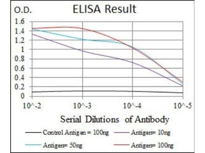 ELISA image for anti-CCAAT/enhancer Binding Protein (C/EBP), alpha (CEBPA) antibody (ABIN4297605)