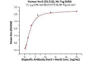 Image no. 1 for Receptor tyrosine-protein kinase erbB-2 (ErbB2/Her2) (AA 23-510) (Active) protein (His tag) (ABIN7013682)