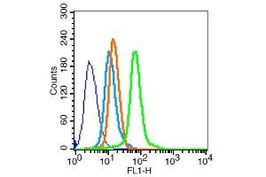Image no. 4 for anti-Transforming Growth Factor, alpha (TGFA) (AA 24-52) antibody (ABIN724415)