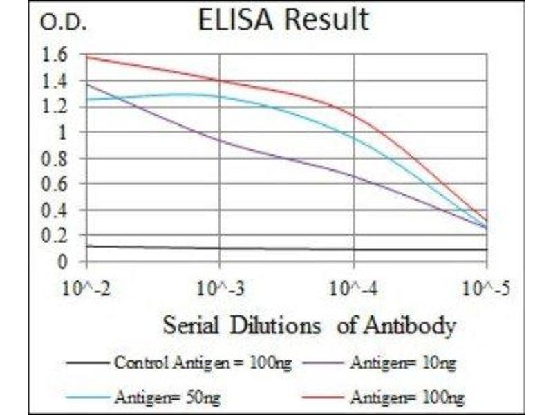 ELISA image for anti-V-Raf-1 Murine Leukemia Viral Oncogene Homolog 1 (RAF1) antibody (ABIN4349225)