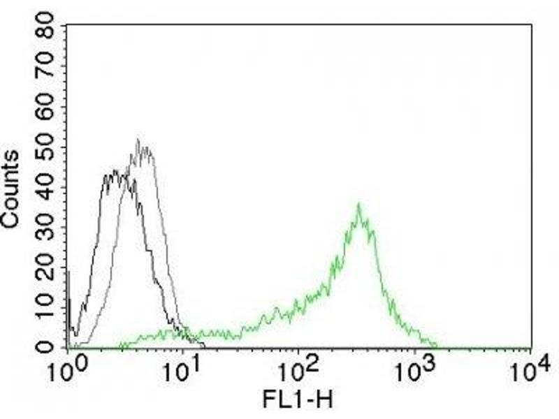 image for anti-Nucleolin (NCL) antibody (PerCP) (ABIN6166102)