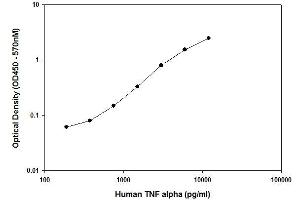 ELISA image for Tumor Necrosis Factor ELISA Kit (TNF) (ABIN2506954)