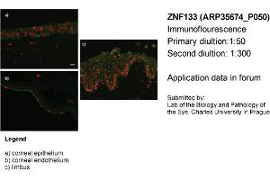 Image no. 2 for anti-Zinc Finger Protein 133 (ZNF133) (N-Term) antibody (ABIN2776396)