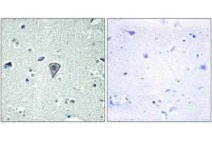 Image no. 1 for anti-G Protein-Coupled Receptor 37 Like 1 (GPR37L1) (AA 1-50) antibody (ABIN2890820)