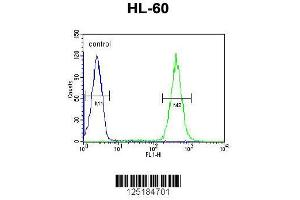 Image no. 3 for anti-Apolipoprotein B mRNA Editing Enzyme, Catalytic Polypeptide-Like 2 (APOBEC2) (AA 19-48), (N-Term) antibody (ABIN651888)