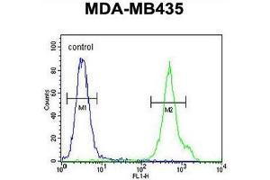 Image no. 1 for anti-Cluster of Differentiation 1e (CD1e) (AA 274-304), (Middle Region) antibody (ABIN951216)