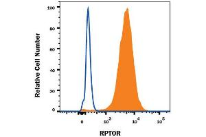 Flow Cytometry (FACS) image for anti-Regulatory Associated Protein of MTOR, Complex 1 (RPTOR) (AA 77-230) antibody (ABIN4900485)