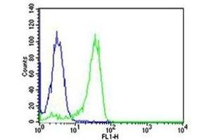 Image no. 1 for anti-Nuclear Factor of kappa Light Polypeptide Gene Enhancer in B-Cells 1 (NFKB1) antibody (ABIN3032043)