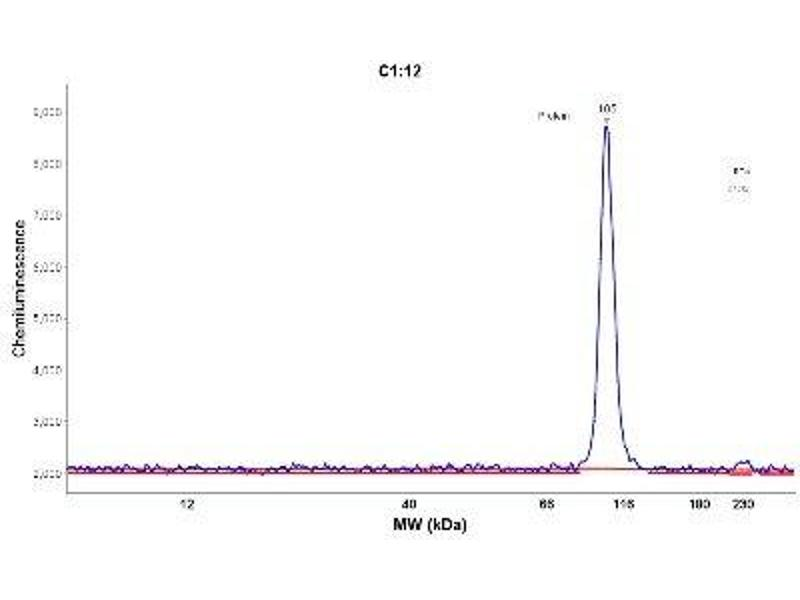 Simple Western (SimWes) image for anti-Molybdenum Cofactor Sulfurase (MOCOS) antibody (ABIN4335161)