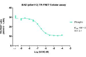 Image no. 2 for Phospho-BAD (S112) TR-FRET Cellular Assay Kit (ABIN6938981)
