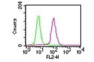 Flow Cytometry (FACS) image for anti-Nuclear Factor-KB P65 (NFkBP65) antibody (ABIN4349897)