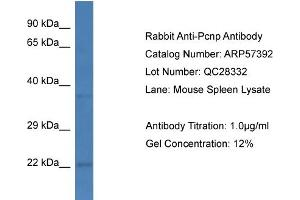 Image no. 1 for anti-PEST Proteolytic Signal Containing Nuclear Protein (PCNP) (C-Term) antibody (ABIN2787203)