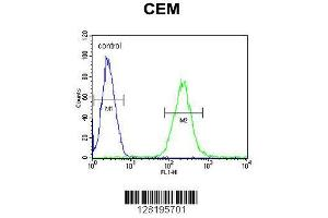 Image no. 1 for anti-Zinc Finger Protein 667 (ZNF667) (AA 303-331) antibody (ABIN654509)