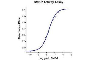 Image no. 1 for Bone Morphogenetic Protein 2 (BMP2) (Active) protein (ABIN1525840)