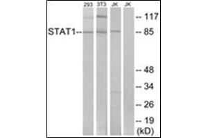 Western Blotting (WB) image for anti-Signal Transducer and Activator of Transcription 1, 91kDa (STAT1) (C-Term) antibody (ABIN5611535)