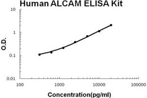 Image no. 1 for Activated Leukocyte Cell Adhesion Molecule (ALCAM) ELISA Kit (ABIN1672890)