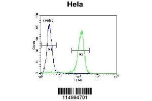 Flow Cytometry (FACS) image for anti-Cyclin C antibody (CCNC) (AA 1-30) (ABIN655158)
