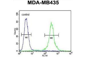Flow Cytometry (FACS) image for anti-Chemokine (C-C Motif) Receptor 8 (CCR8) (AA 297-325), (C-Term) antibody (ABIN951452)