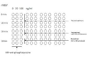 image for Tyrosine ELISA Kit (ABIN1981848)