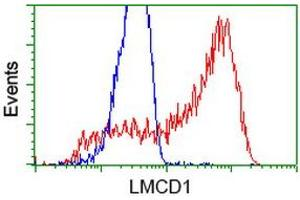 Image no. 1 for anti-LIM and Cysteine-Rich Domains 1 (LMCD1) antibody (ABIN2724852)