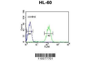 Image no. 3 for anti-Carbonic Anhydrase VB, Mitochondrial (CA5B) (AA 253-283), (C-Term) antibody (ABIN652315)