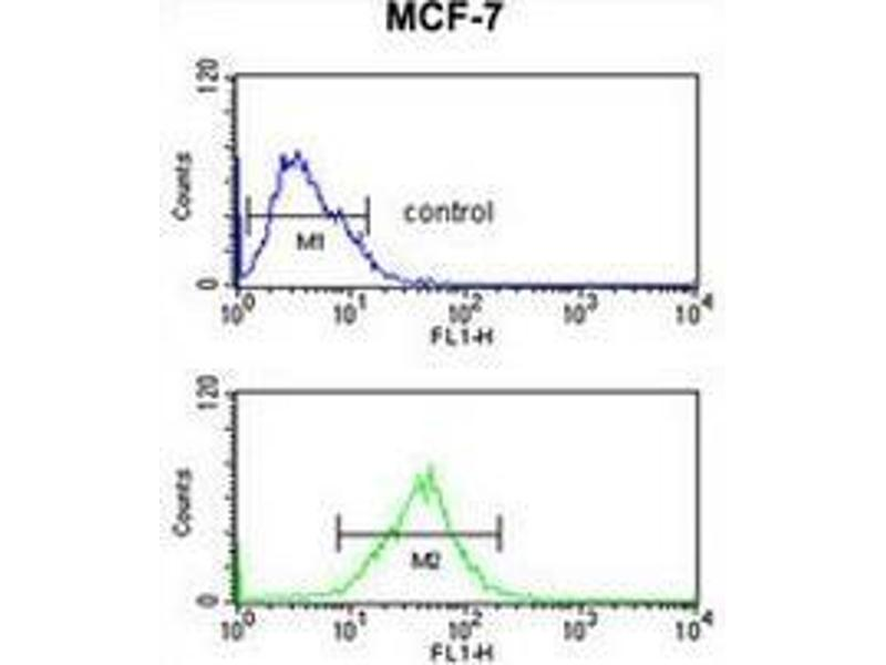 anti-SNRPD3 antibody (AA 97-126, C-Term) | Product No  ABIN954872