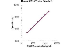 Image no. 1 for Carbonic Anhydrase XIV (CA14) ELISA Kit (ABIN3199202)