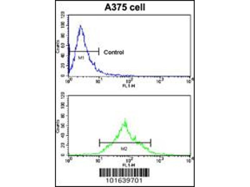 Flow Cytometry (FACS) image for anti-EPH Receptor A7 antibody (EPHA7) (N-Term) (ABIN2160957)