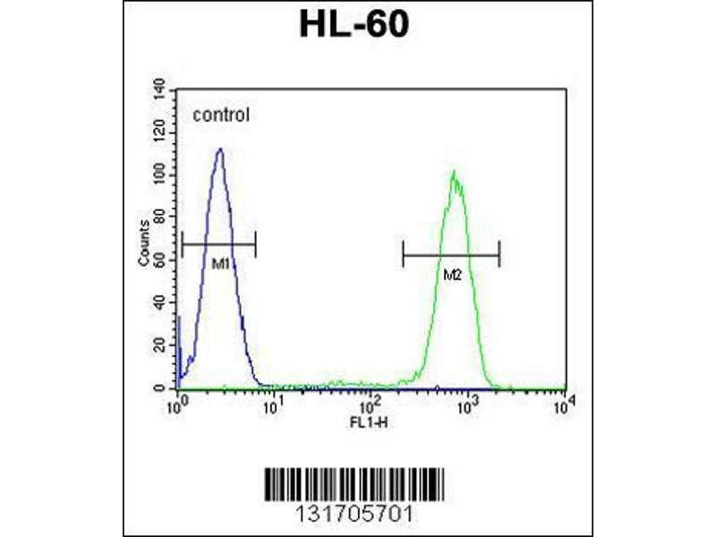 Flow Cytometry (FACS) image for anti-Caspase 12 (Gene/pseudogene) (CASP12) (AA 165-193), (Center) antibody (ABIN655966)