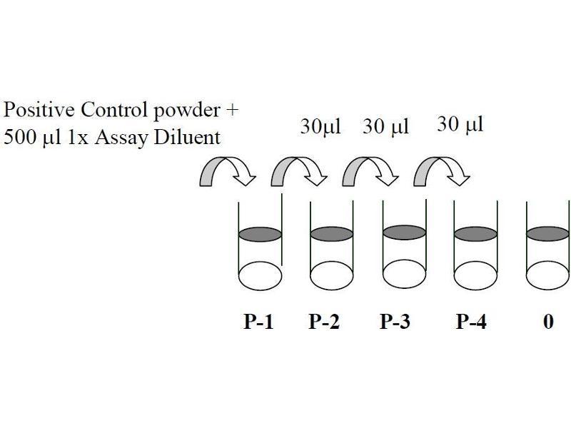 Mitogen-Activated Protein Kinase Kinase 1 (MAP2K1) ELISA Kit