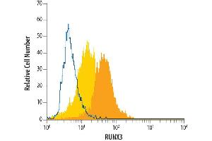 Flow Cytometry (FACS) image for anti-Runt-Related Transcription Factor 3 (RUNX3) (AA 186-415) antibody (ABIN4899364)