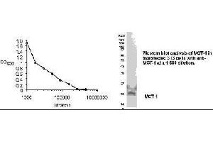 ELISA image for anti-Malignant T Cell Amplified Sequence 1 (MCTS1) antibody (ABIN152954)