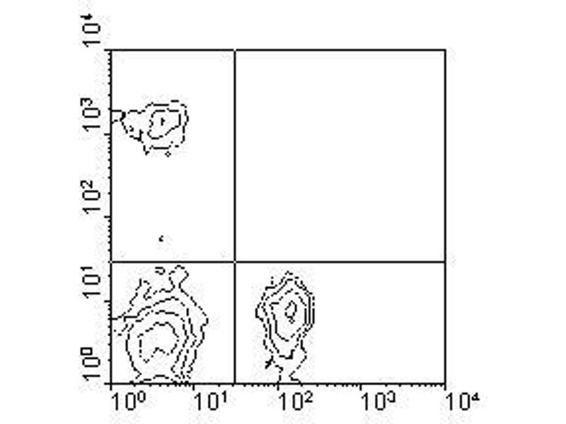 image for anti-CD4 Molecule (CD4) antibody (ABIN135500)