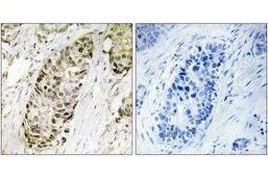 Image no. 1 for anti-Growth Arrest and DNA-Damage-Inducible, gamma (GADD45G) (AA 101-150) antibody (ABIN1534445)