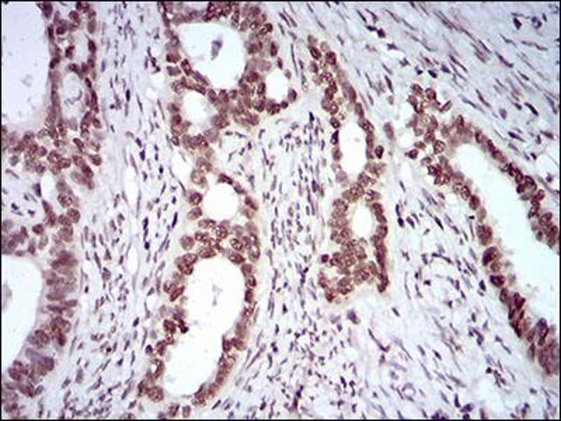 Image no. 3 for anti-KH Domain Containing, RNA Binding, Signal Transduction Associated 2 (KHDRBS2) (AA 160-349) antibody (ABIN5924815)