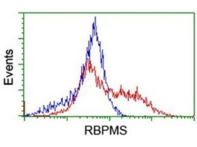Flow Cytometry (FACS) image for anti-RNA Binding Protein with Multiple Splicing (RBPMS) antibody (ABIN4349703)