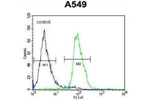 Image no. 1 for anti-DDB1 and CUL4 Associated Factor 10 (DCAF10) (AA 118-148), (N-Term) antibody (ABIN955549)