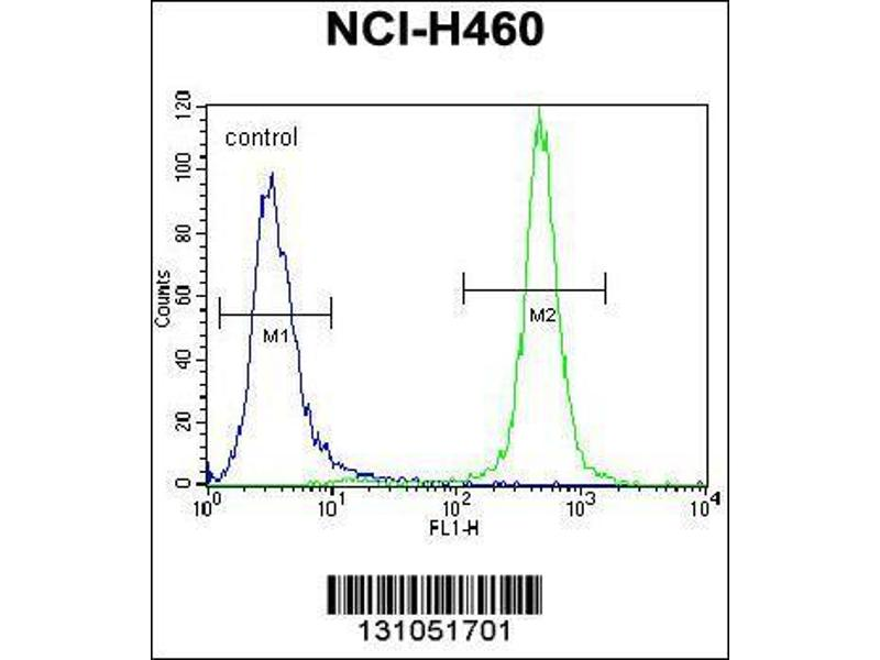 Flow Cytometry (FACS) image for anti-Macrophage Stimulating 1 (Hepatocyte Growth Factor-Like) (MST1) (AA 454-483), (C-Term) antibody (ABIN656286)