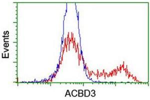 Image no. 1 for anti-Acyl-CoA Binding Domain Containing 3 (Acbd3) antibody (ABIN2715641)