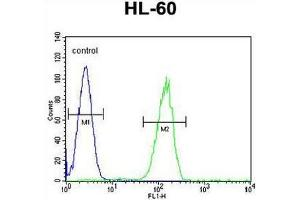 Image no. 1 for anti-G Protein-Coupled Receptor 142 (GPR142) (AA 93-122), (N-Term) antibody (ABIN952600)