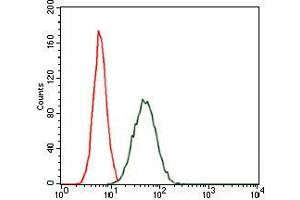 Image no. 1 for anti-CCAAT/enhancer Binding Protein (C/EBP), alpha (CEBPA) antibody (ABIN969048)