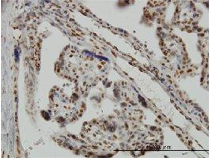 drosophila immunohistochemistry Drosophila melanogaster: antibodies with cross-reactivity nos antibody p ihc-fr m ihc-fofr ms dm in drosophila.