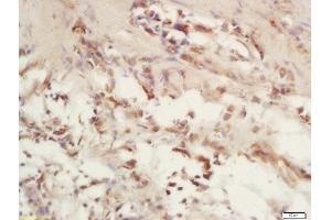 Image no. 1 for anti-Cytochrome C Oxidase Subunit VIc (COX6C) (AA 21-75) antibody (ABIN1714715)