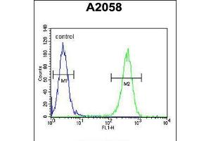 Image no. 3 for anti-Glutamine-Fructose-6-Phosphate Transaminase 2 (GFPT2) (AA 175-201) antibody (ABIN5535892)
