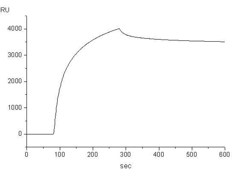image for IgE protein (ABIN363697)