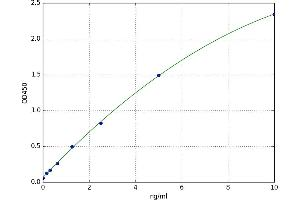 Image no. 1 for Cytochrome P450, Family 1, Subfamily B, Polypeptide 1 (CYP1B1) ELISA Kit (ABIN5523130)