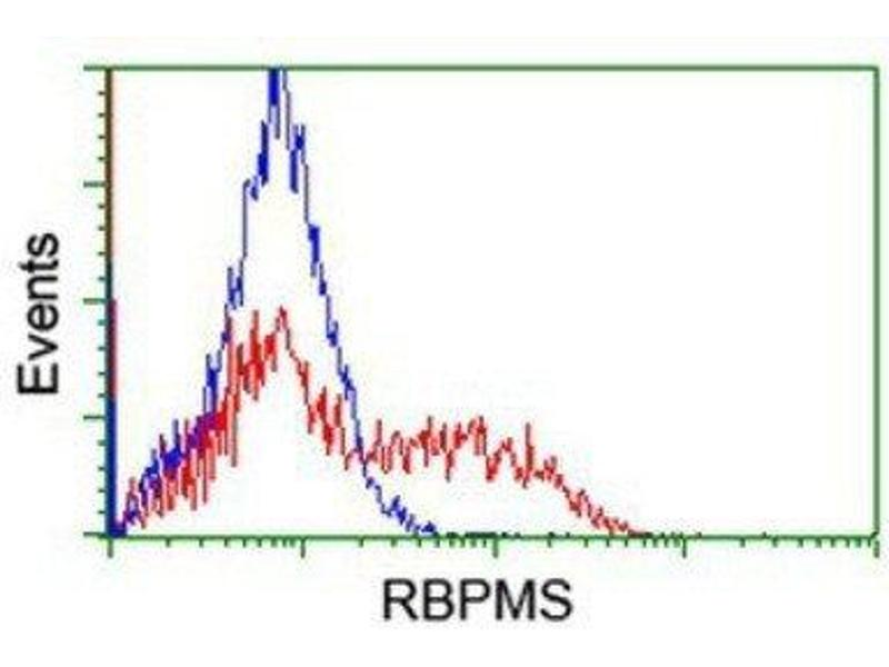Flow Cytometry (FACS) image for anti-RNA Binding Protein with Multiple Splicing (RBPMS) antibody (ABIN4349700)